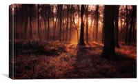 Frosty Morning Woods, Canvas Print