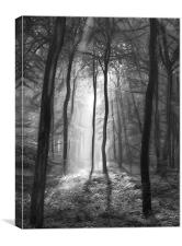 The light and shadows of the forest, Canvas Print