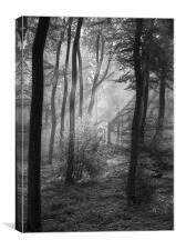 The Tones of the Forest, Canvas Print