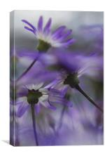 Senetti Flowers, Canvas Print