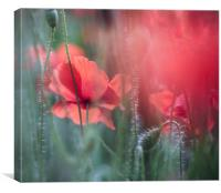 Summer Poppies, Canvas Print