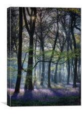 Morning Bluebells, Canvas Print