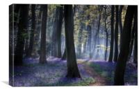 Woodland Spring , Canvas Print