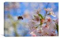 bumblebee and apple tree blossom, Canvas Print