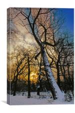 snow tree at sunrise, Canvas Print