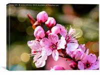 A sign of Spring, Canvas Print