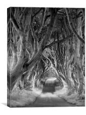 The Dark Hedges, Northern Ireland, Canvas Print