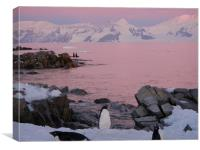 Dusk on the Antarctic Peninsula., Canvas Print