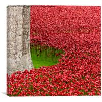 Poppies at the Tower of London, Canvas Print