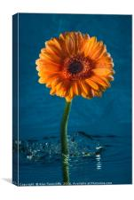 Water daisy, Canvas Print