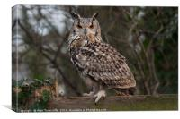 Eurasian eagle owl, Canvas Print
