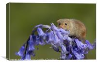 Harvest mouse on bluebells, Canvas Print