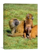 Monkey with baby, Canvas Print