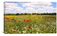 Kent countryside meadow, Canvas Print