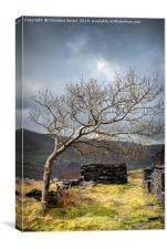 Dinorwic Slate Quarry - The Tree, Canvas Print