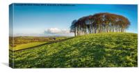 Stand of Beech Trees, Canvas Print