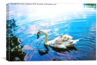 Thirsty Cygnet, Canvas Print