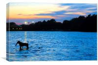 Dog Playing in Whitligham Lake at Sunset, Norwich,, Canvas Print