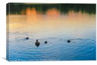 Family of Ducks at Sunset, Canvas Print