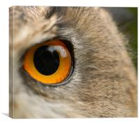 Eagle Eye, Canvas Print