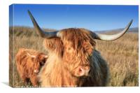 Highland Cow in the Field, Canvas Print