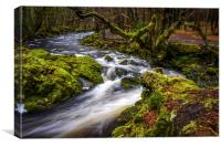 Tollymore Forest, Northern Ireland, Mournes , Canvas Print