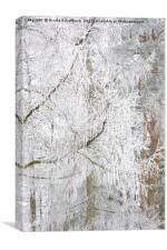Frosted Tree, Canvas Print