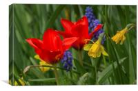 Tulips And Daffodils, Canvas Print