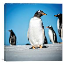 Is This My Best Side?, Canvas Print