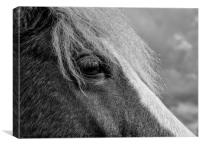 New Forest pony , Canvas Print