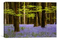 Bluebells in Challock woods, Canvas Print