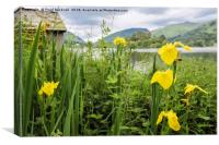 Irises by Grasmere, Canvas Print