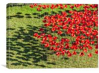 Poppies For The Fallen, Canvas Print