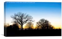 Sunset at RHS Gardens, Wisley, Canvas Print