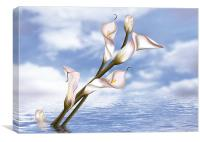 Callas In Water, Canvas Print