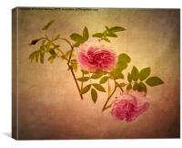 Beauty in Pink, Canvas Print