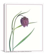 Snake Head Fritillary against white background, Canvas Print