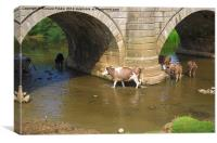 Cows Paddling in a River, Canvas Print