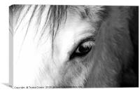 The eye of a white horse - Mirror to the soul, Canvas Print