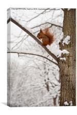 Squirrel sitting on twig in snow and eating, Canvas Print
