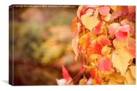 vine red yellow leaves abstract, Canvas Print