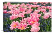 Blue forget me nots pink tulips, Canvas Print