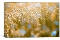 Grass inflorescence shining, Canvas Print