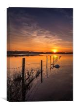 Swanning under the fence, Canvas Print