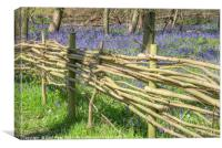 Wicker Fence around Bluebell Wood, Canvas Print