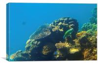 This is why they call it the GREAT Barrier Reef, Canvas Print