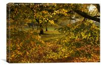 London Park 3 Autumn, Canvas Print
