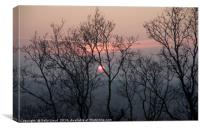 Red sunset trees, Canvas Print