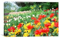 Spring tulips in English park, London , Canvas Print