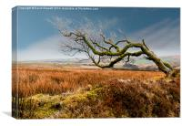Prevailing Wind, Canvas Print